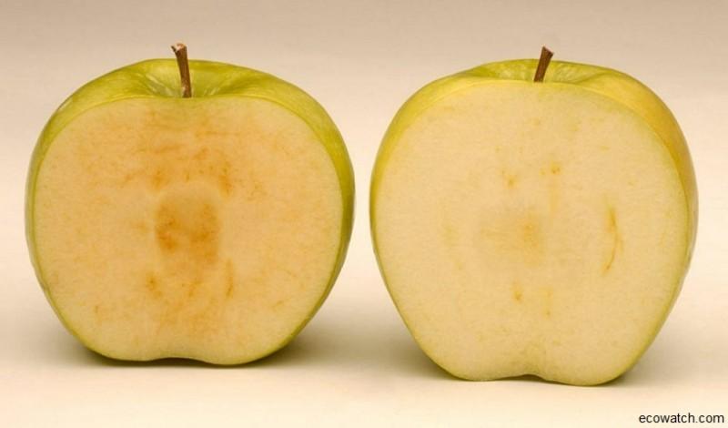 Продукты с ГМО уже давно в вашем магазине