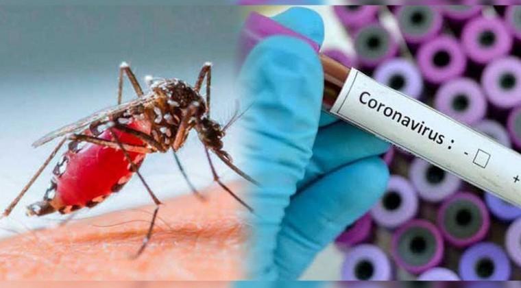 Могут ли комары передавать коронавирус?