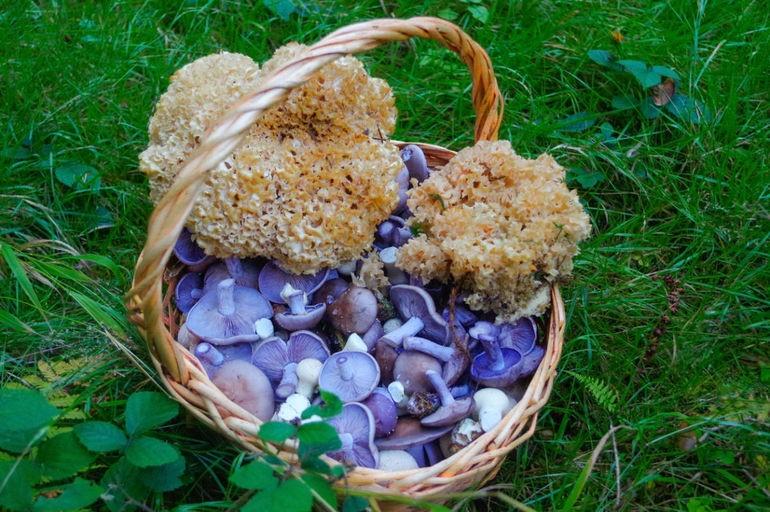 Топ-10 ядовитых грибов, которые точно не стоит класть в корзину